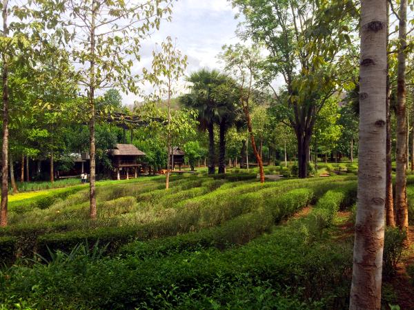 Vista del recinto principal con el cultivo de plantas de té y el restaurante Rabiang Cha al fondo.