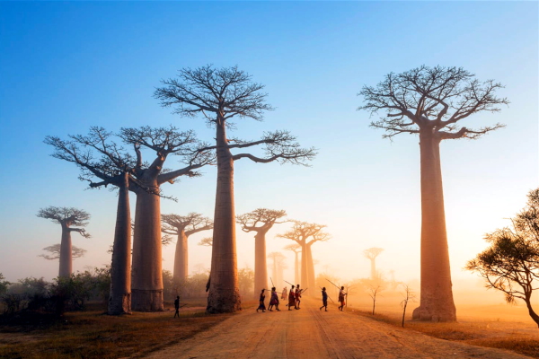 Madagascar en Turista Premium por 27.000 millas.